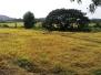 Nagesh Organic Farm, Chandor